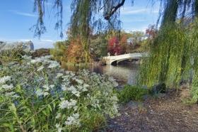 The Bow Bridge Is Central Park's Most Photographed Bridges For Good Reason