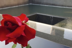 Red Rose On Reflecting Absence Memorial Pool, 9-11 National Memorial Site