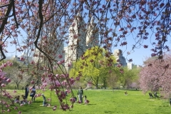 Vibrant Colors Of Central Park In Spring