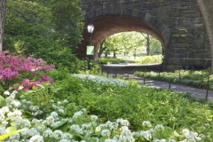 Pretty Flowers Can Be Found Throughout Central Park Each Spring