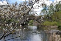 Gapstow Bridge In Spring