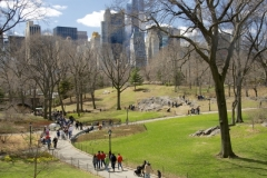 Greenery Returns To Central Park Each Spring