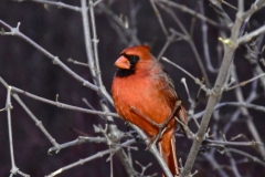 Over 200 Species Of Birds Call Central Park Home
