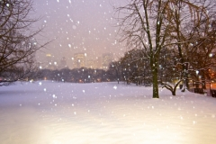 A Magical Central Park Snow Storm