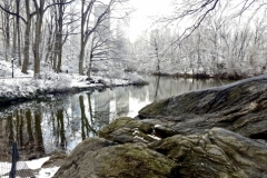 Central Park Winter At The Pond