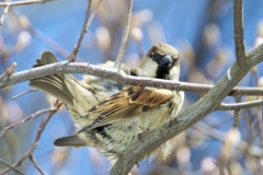 One Of Central Park's Many Bird Species-Seen On A Winter's Day