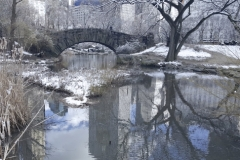 Pond Reflections At Central Park's Gapstow Bridge In Winter