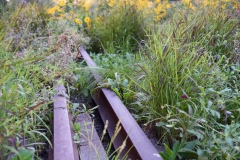 Former Railroad Tracks Mixed With Lush Foliage-High Line Park